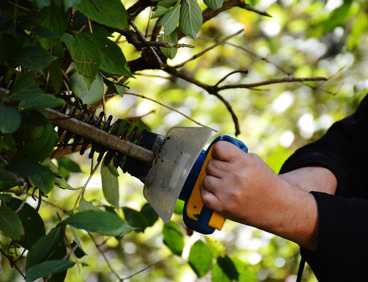Entretien du jardin: comment couper facilement sa haie?